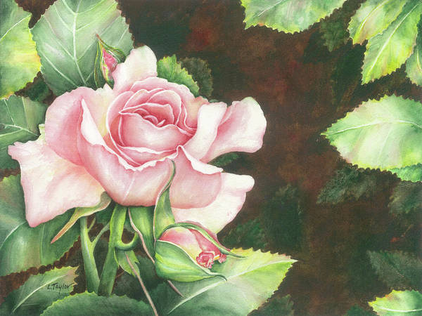 Painting - Grace by Lori Taylor
