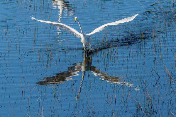 Photograph - Graceful Bird Nice Reflection by Dan Friend