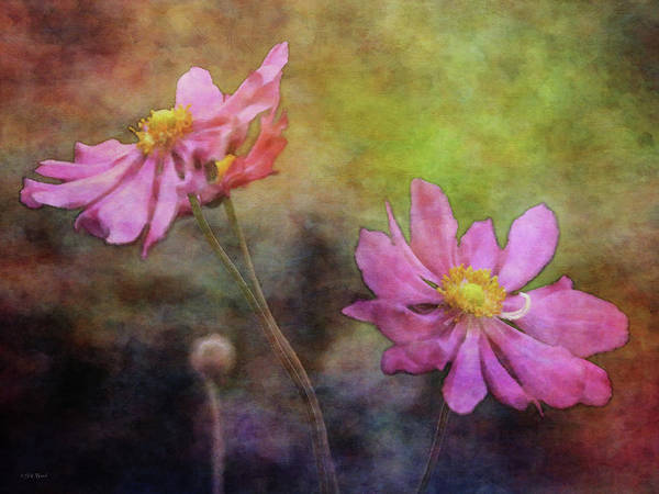 Photograph - Graceful Gathering 5566 Idp_3 by Steven Ward