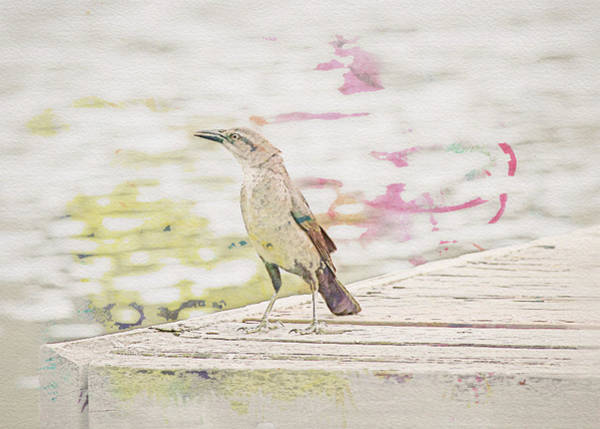 Photograph - Grackle On A Dock Watercolor by Alison Frank