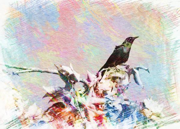 Digital Art - Grackle Sketch by Alison Frank