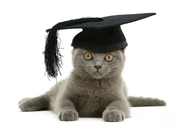Photograph - Graduation Kitty by Warren Photographic
