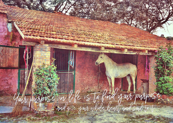 Photograph - Granaio Rosso Quote by Jamart Photography