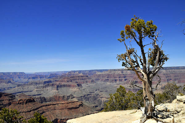 Wall Art - Photograph - Grand Canyon 01 by Andrew Dinh
