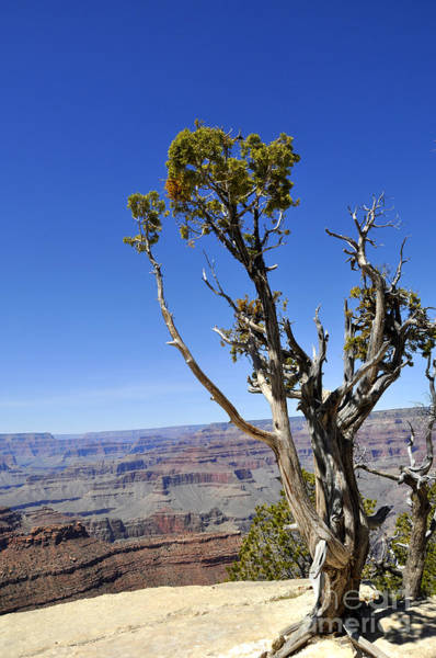 Wall Art - Photograph - Grand Canyon 02 by Andrew Dinh