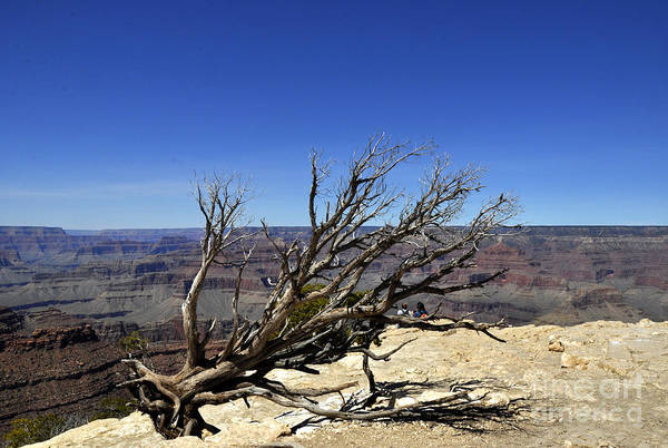 Wall Art - Photograph - Grand Canyon 03 by Andrew Dinh