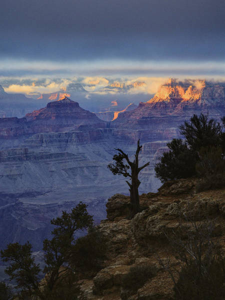 Photograph - Grand Canyon Lone Tree by Chance Kafka