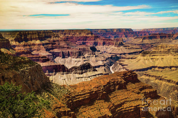 Photograph - Grand Canyon South Rim #8 by Blake Webster