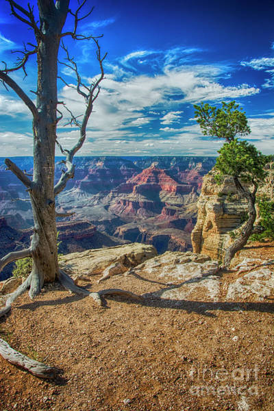 Photograph - Grand Canyon Springs New Life by Ken Johnson