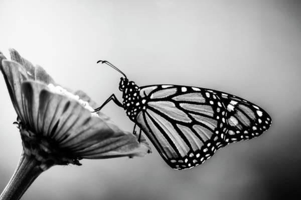 Metamorphosis Photograph - Grand Distinction by Matthew Blum