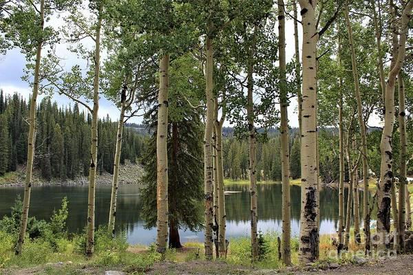 Photograph - Grand Mesa Lake by Tammie J Jordan