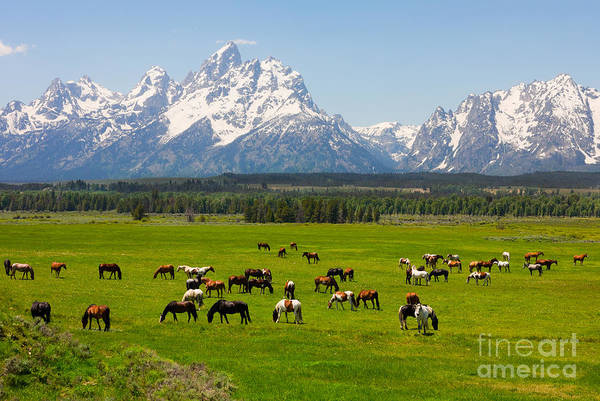 Mt Wall Art - Photograph - Grand Teton National Park by Andrew Zarivny