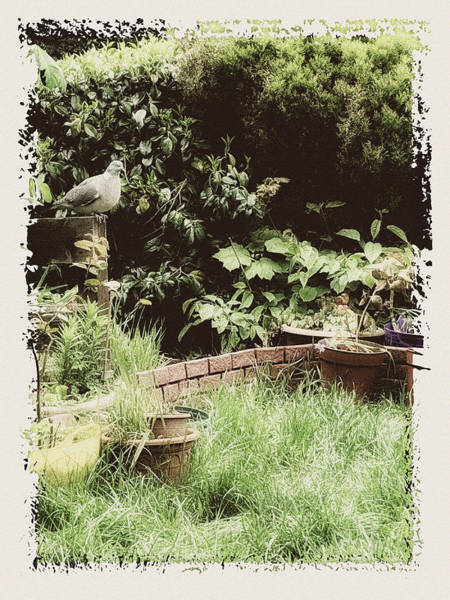 Photograph - Grandma Garden by Tatiana Travelways