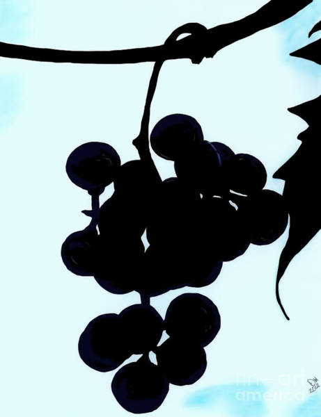 Drawing - Grapes by D Hackett