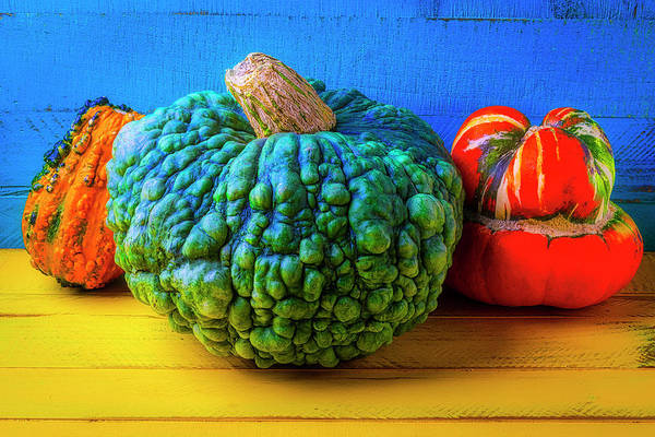 Wall Art - Photograph - Graphic Autumn Pumpkins And Gourds by Garry Gay