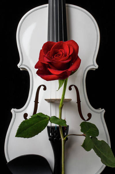 Wall Art - Photograph - Graphic White Violin And Red Rose by Garry Gay