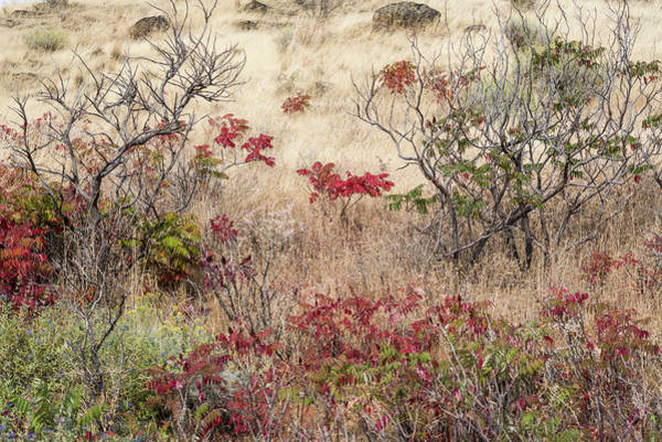 Photograph - Grass And Sumac by Robert Potts