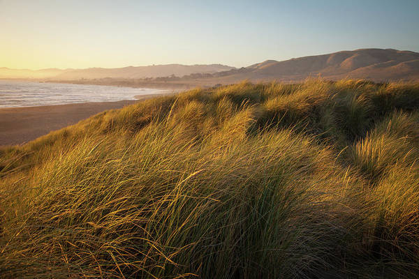 Sonoma County Photograph - Grass Covering Dunes By The Beach by Karen Desjardin