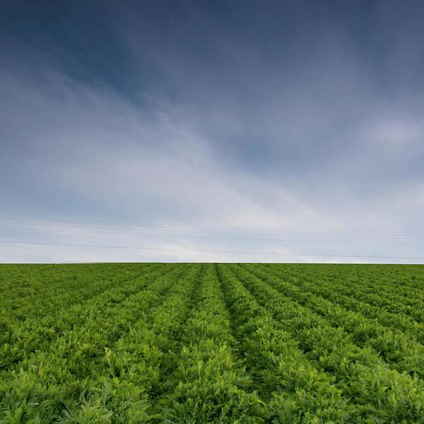 Fredericksburg Wall Art - Photograph - Grass Field by By Muhilan Mg