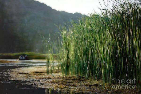 Wall Art - Digital Art - Grass Marsh Van Long Nature Vietnam  by Chuck Kuhn