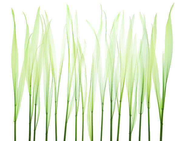 Object Photograph - Grass by Nick Veasey