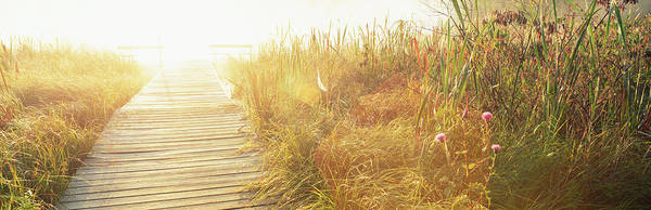 Wall Art - Photograph - Grass On The Both Sides Of A Pier by Panoramic Images