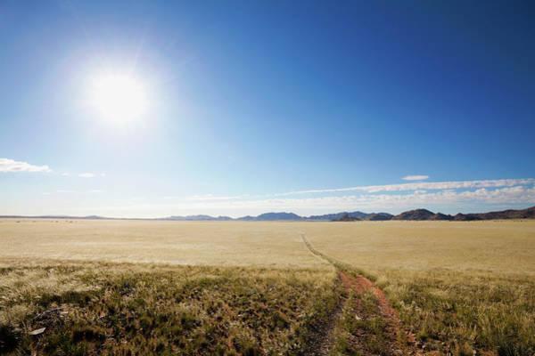 Savannah Photograph - Grass Track In Namibian Savannah, Namib by Hougaard Malan
