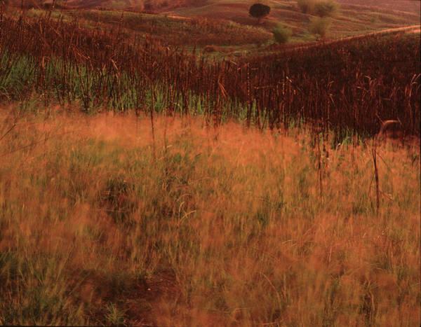 Photograph - Grasses And Sugarcane, Trinidad by Trinidad Dreamscape