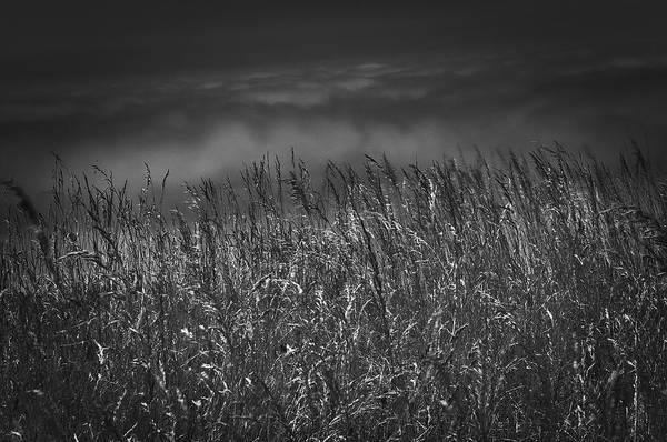 Photograph - Grasses At The Top by David Resnikoff