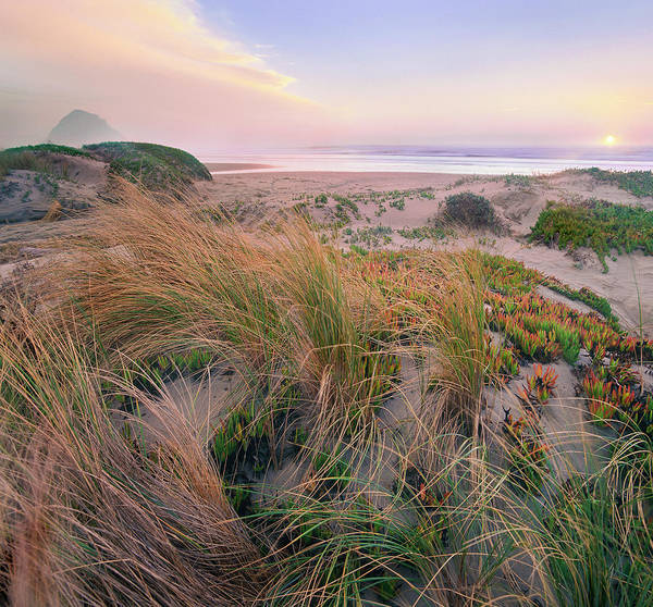 Photograph - Grasses On Dunes, Morro Rock, Morro by