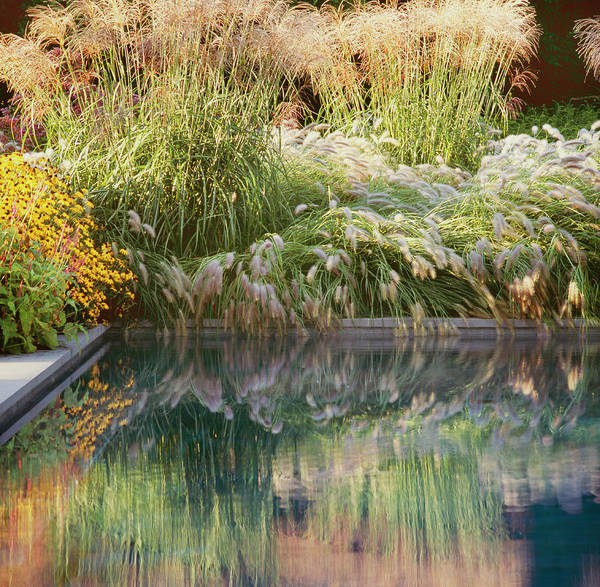 Southampton Water Wall Art - Photograph - Grasses With Pool Edge by Richard Felber