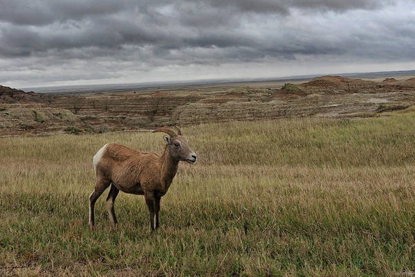 Photograph - Grasslands South Dakota United States Of America by Gerlinde Keating - Galleria GK Keating Associates Inc