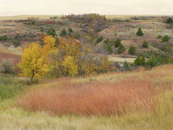 Photograph - Grassy Autumn Reverie by Cris Fulton