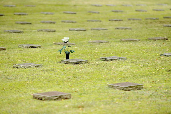 Wall Art - Photograph - Grave Slabs And White Rose To Commemorate In The Military Cemetery Waldfriedhof Halbe One Of The by imageBROKER - Andreas Vitting