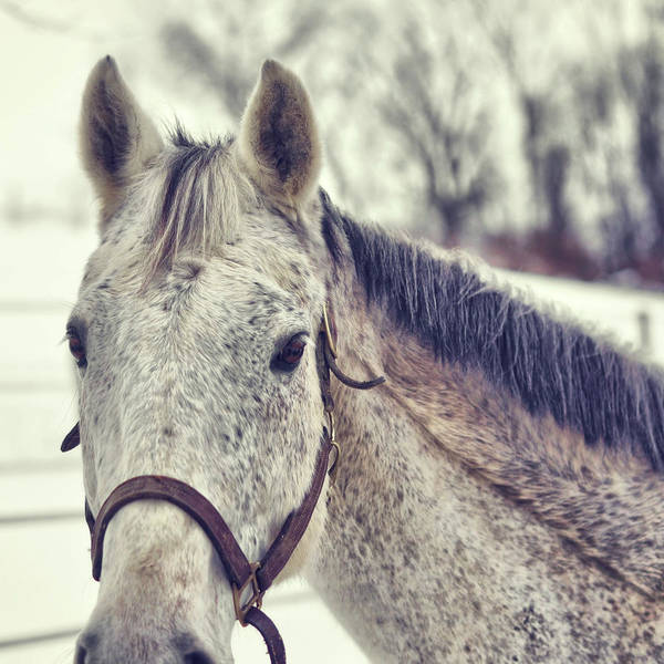 Gray On Winter White Art Print by JAMART Photography