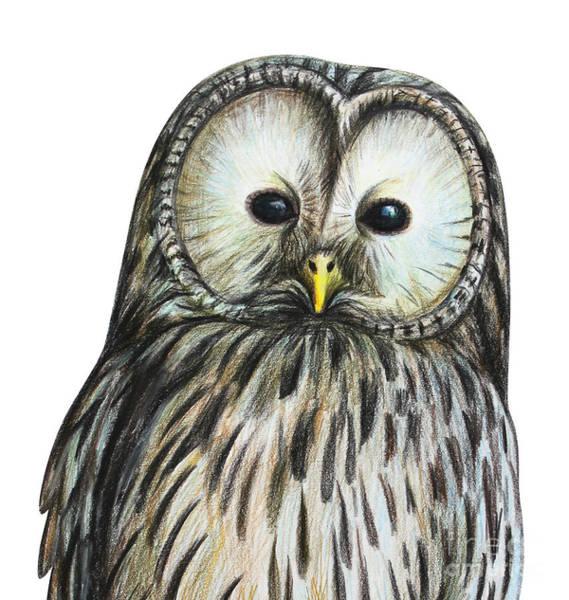 Wall Art - Digital Art - Gray Owl Portrait Drawing by Viktoriya art