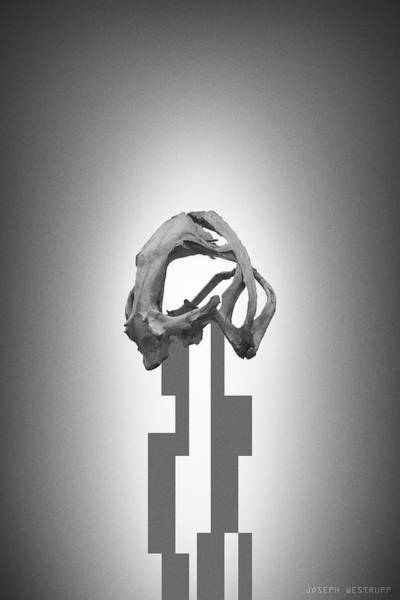 Figurative Abstract Photograph - Gray Rose - Surreal Abstract Frog Skull by Joseph Westrupp