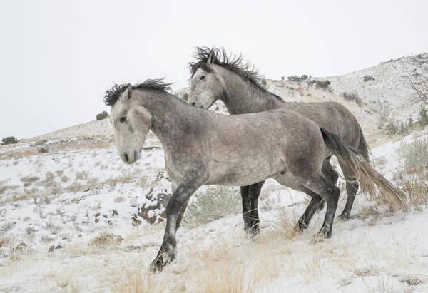 Photograph - Gray Winter by Kent Keller