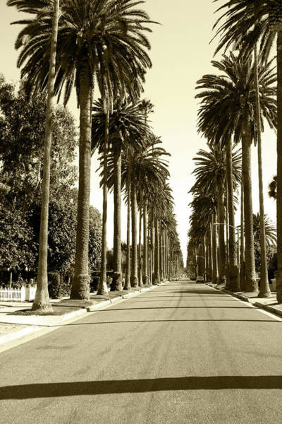 City Of Los Angeles Photograph - Grayscale Image Of Beverly Hills by Marcomarchi