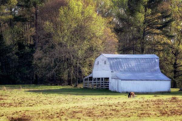 Photograph - Grazing Along The Trace by Susan Rissi Tregoning