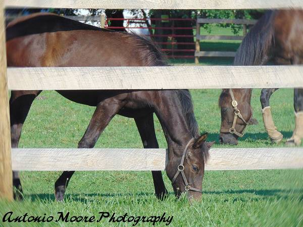 Photograph - Grazing Beauty by Antonio Moore