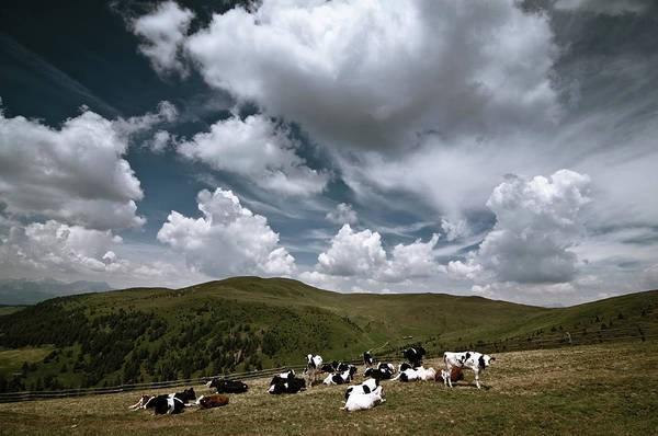Ranch Hand Photograph - Grazing Cows In The Mountains by Scacciamosche