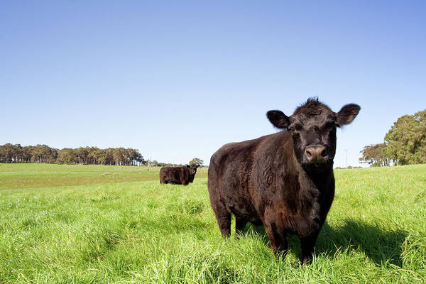 Ranch Photograph - Grazing Farm Animals by Tap10