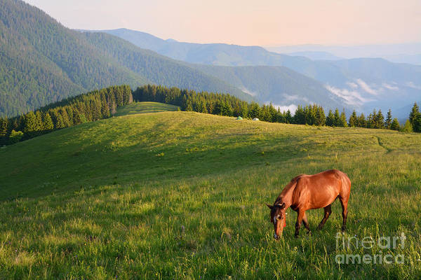Freshness Wall Art - Photograph - Grazing Horse On Mountain Pasture by Brum