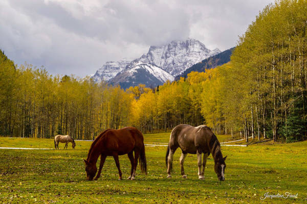 Photograph - Grazing In Aspen by Jacqueline Faust