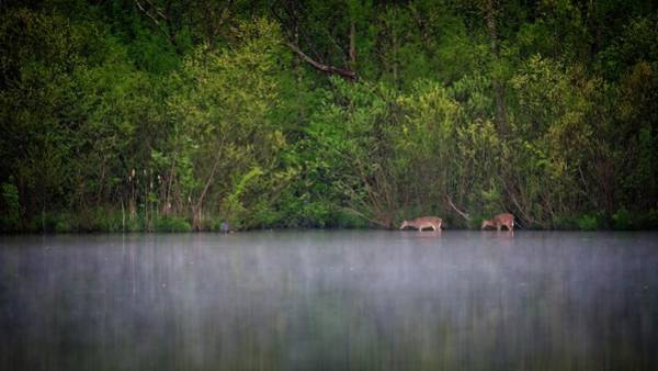 Photograph - Grazing In The Lake by John Benedict