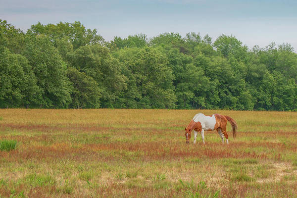 Photograph - Grazing Paint Horse by Kristia Adams