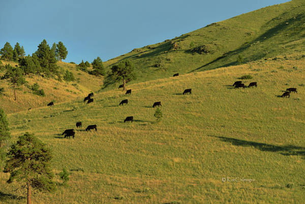 Photograph - Grazing The Hills by Kae Cheatham
