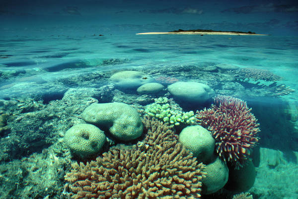 Great Barrier Reef In The Foreground Art Print by Auscape / Uig