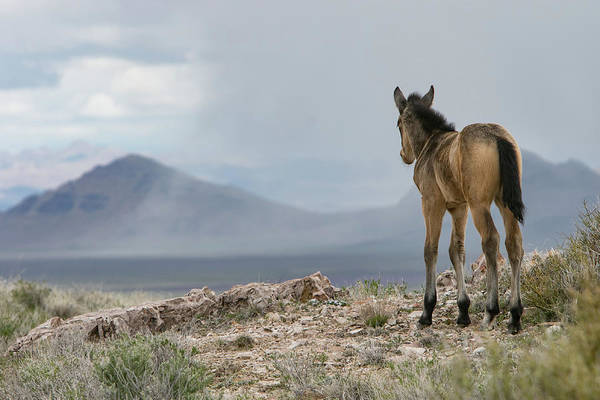 Photograph - Great Big World by Kent Keller